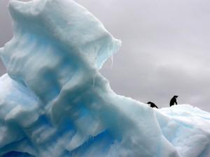 pole-nord-pengouin